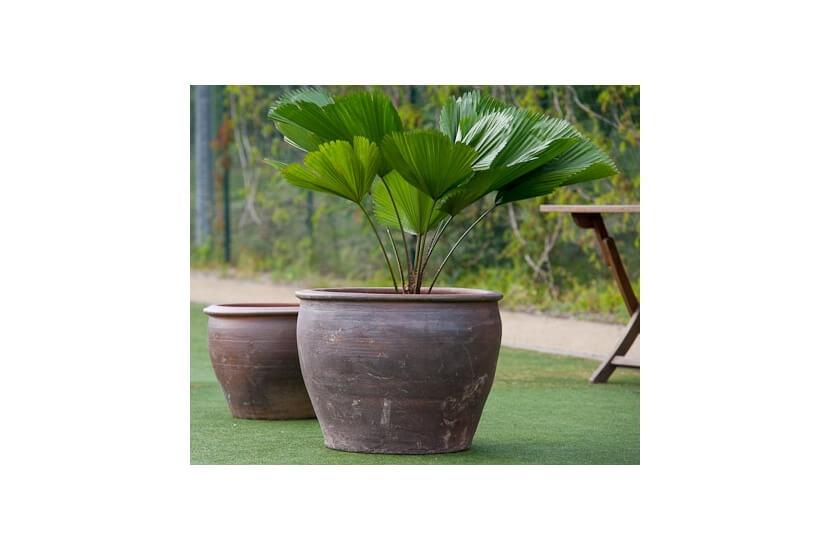 Donica Ceramiczna Sicilia DB Thai 30x25 cm